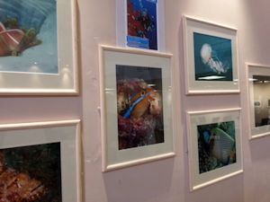 Stevenage Underwater Photography Society